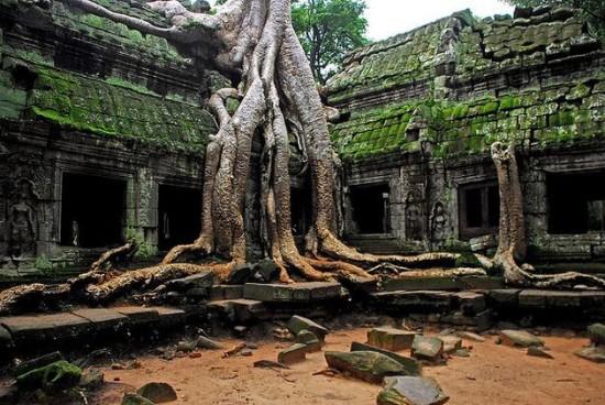 Angkor fával